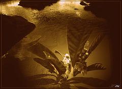 Naître demain, renaître hier,  En marche........... avant, en marche ....arrière,  M'incarner dans ..................ces divergences