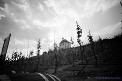 St Clara's Vineyard