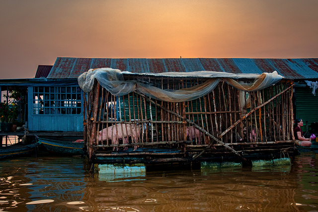 Pig breeding on floating pontoon