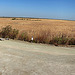 Sonny Bono NWR panorama