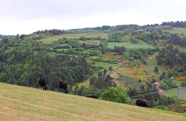 Souviens-toi l'été dernier- paysage montagnards en fleurs (2)