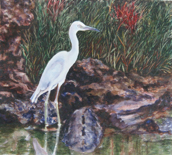 Le-heron-observateur
