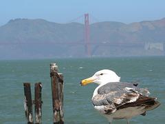 San Francisco,et le Golden Gate