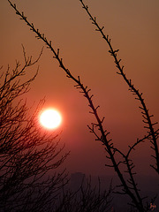 Basket-sun