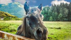 Pferdegeflüster ...