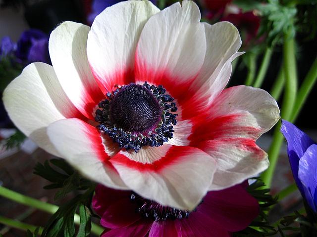 Fleur taguée