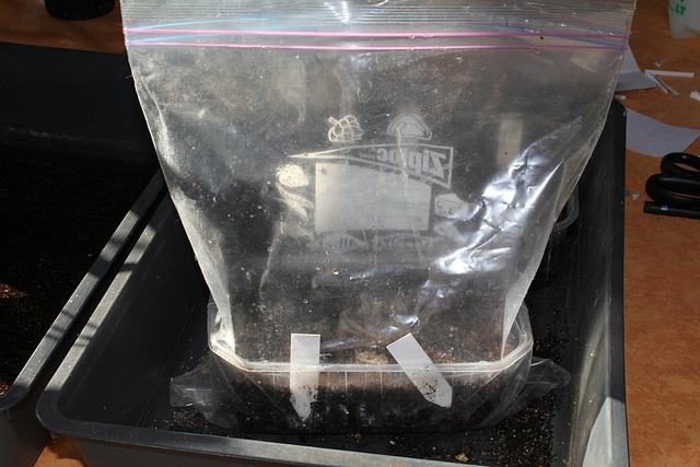 ensachage des semis de xéro