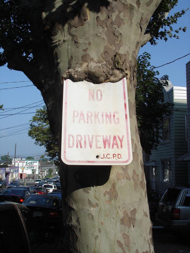 No parking driveway tree / Arbre et stationnement - 21 juillet 2008.
