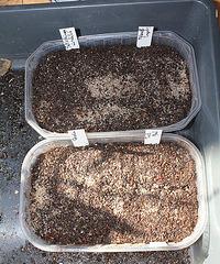 semis de Xéro