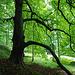 Mulgrave Woods