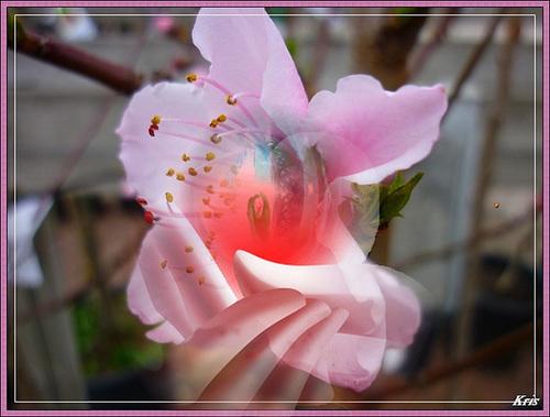 Tiens-moi la main, petite fleur........Pauvre père jardinier en pleurs