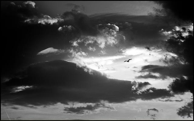 sky_bird