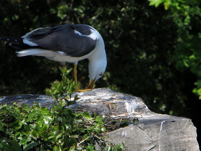 Vögel im Park Lake
