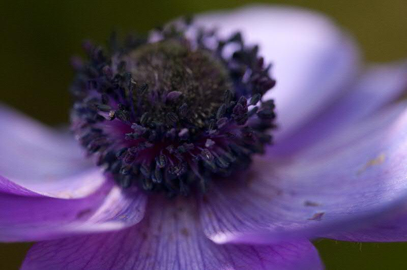close up of anemone