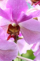 Orchidée 5