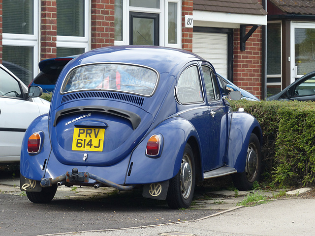 Beetle in Blue - 28 August 2014