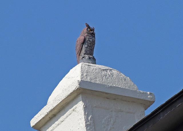 Guard Owl