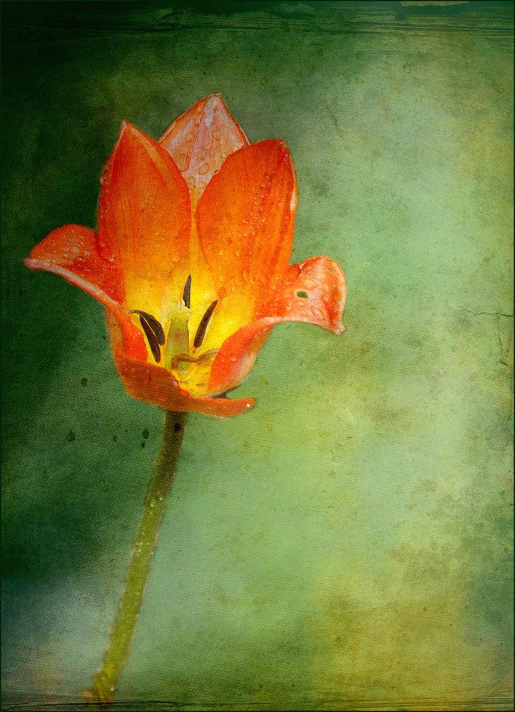 Une fleur par jour.... - Page 4 12561114.6f69354a.1024
