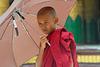 Young novice getting monkshood