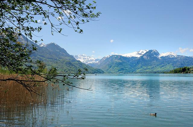 Le lac de Sarnen (Suisse Centrale)...