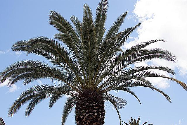 20120506 8931RAw [E] Palme, Trujillo