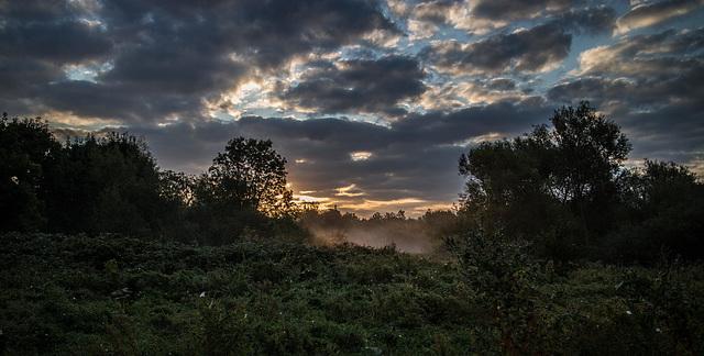 Early Morning Sun.