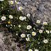 20120318 7975RAw [TR] Pergamon, Kamille