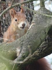 Auf dem Baum