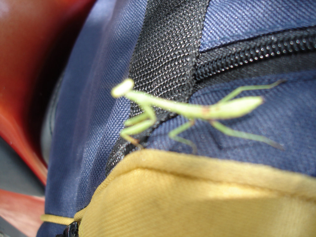 Présence sympatique sur nos bagages / A temporary friend on our luggages - 8 juillet 2010.