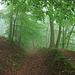 ein Hohlweg in  Wald und Nebelwolken