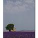 2012 06 29 3898 modifié-1 copie