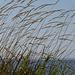 Grass at Crescent Beach