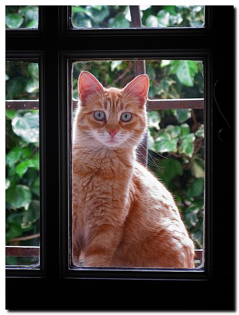 Katze am Küchenfenster