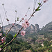 Spring in Wuyi