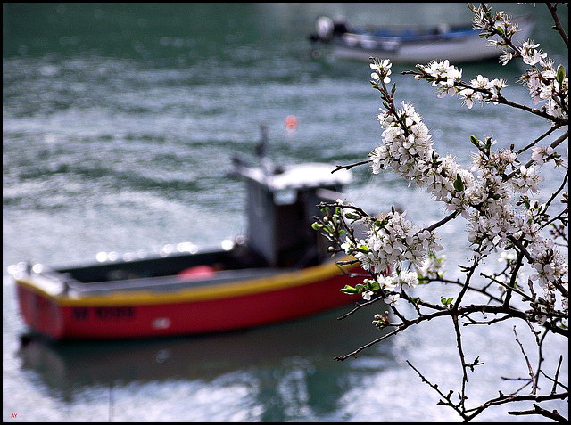 Blossoms and boats