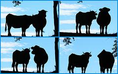 Une Belle Vacherie