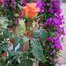 Une rose parmi les fleurs