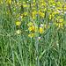 Wiesenblumen und Gräser