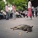 ueno park cat