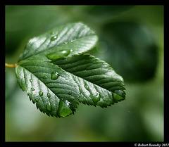 Après la pluie ........