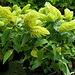 Fleurs bien vertes