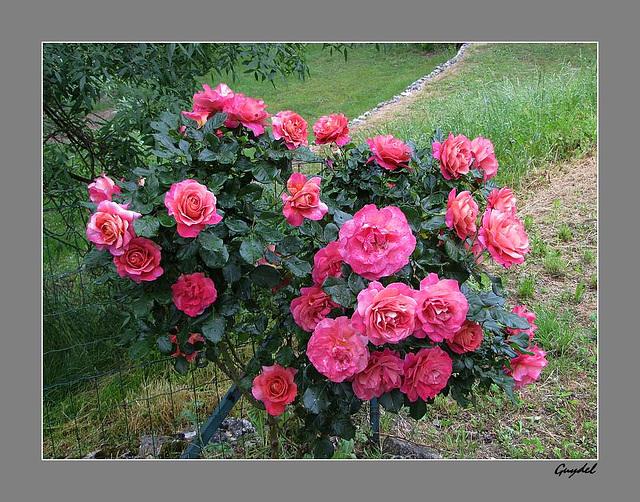 Gros Bouquet