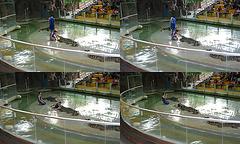 Jeux avec crocodiles