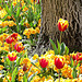 Tulip and trunk