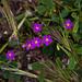 20120506 9026RAw [E] Frauenspiegel, Trujillo