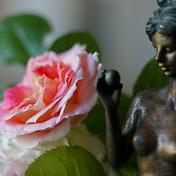 La rose et Aphrodite