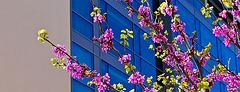 Primavera urbana. Panorámica 3.