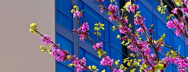 Primavera urbana.