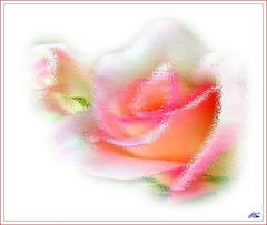 Ciao bella  A l'angle de mes larmes