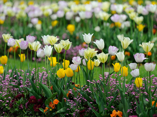 Plates-bandes fleuries...